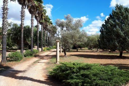 Einfahrt mit Palmen auf Mallorca