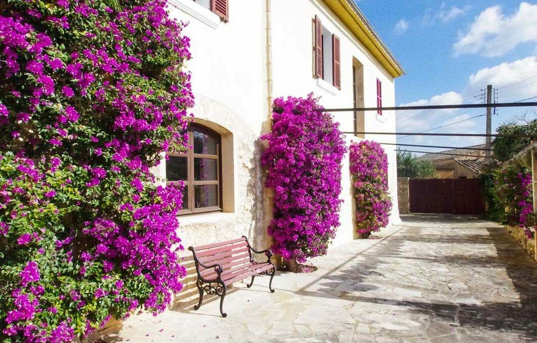 Blumen Terrasse Finca Mallorca