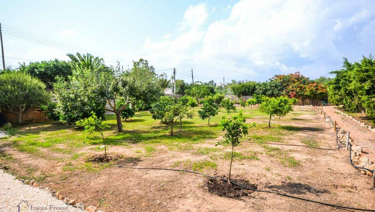 villa-spanien-hauskauf-investition-obstbäume-