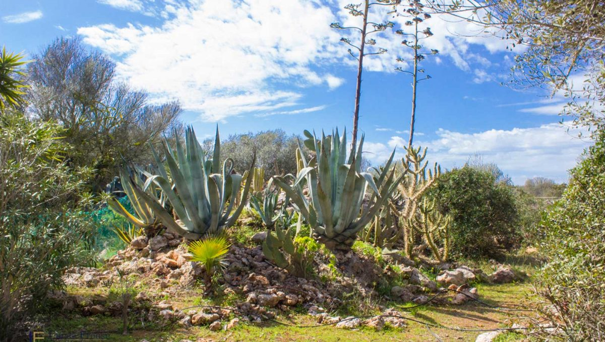 Santanyi Finca Garten Mallorca