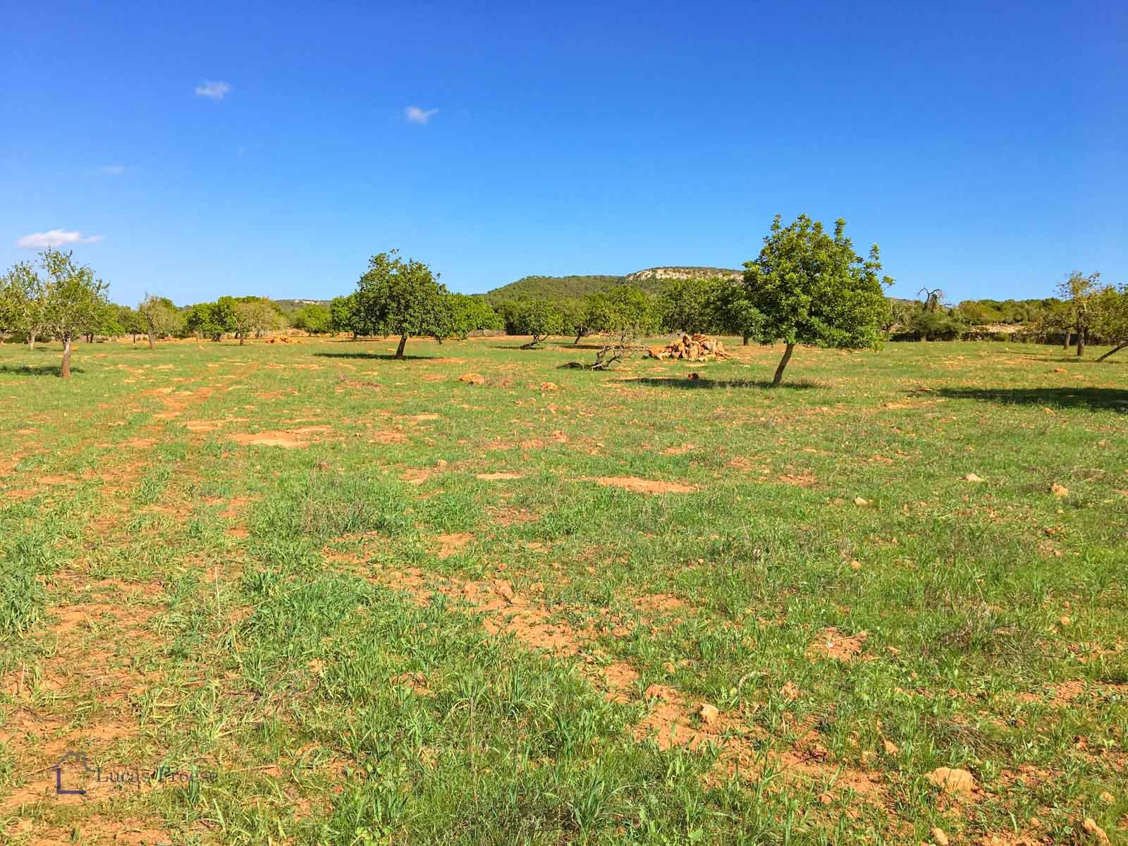 Großes Baugrundstück zwischen Cas Concos und Santantyi