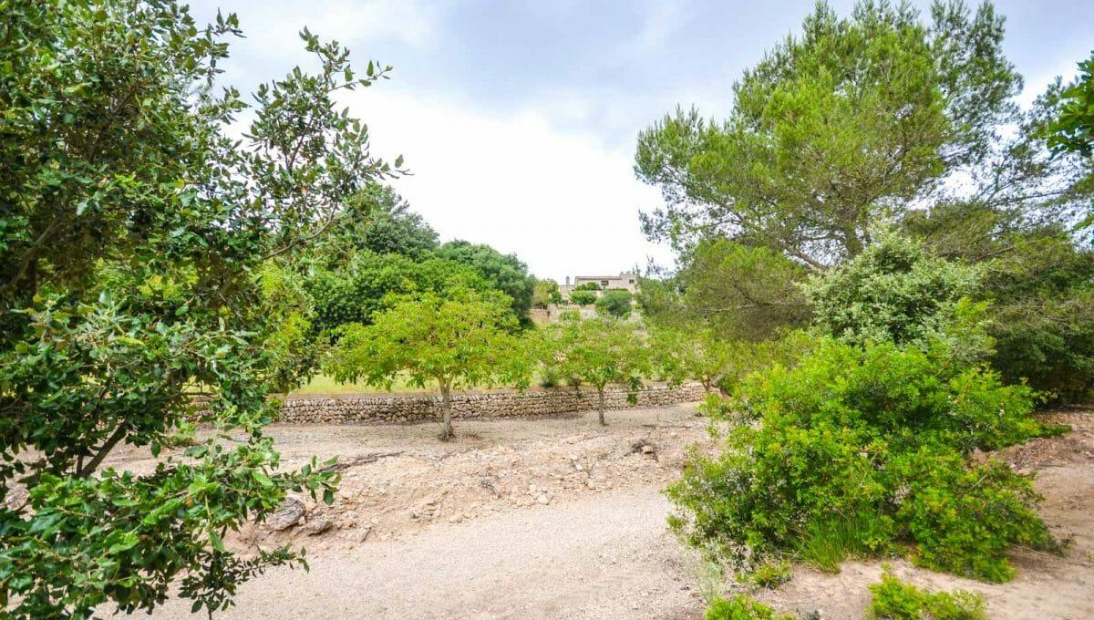 Finca Arta Immobilien Mallorca