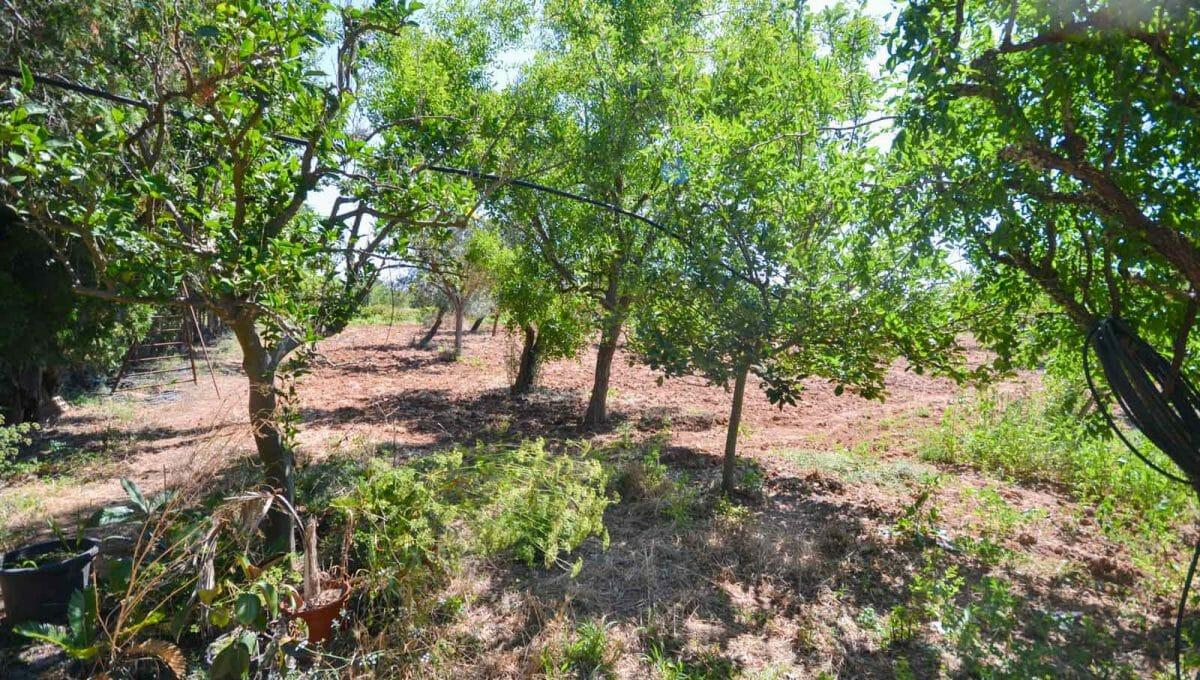 Naturfinca in Felanitx mit grsosses Garten