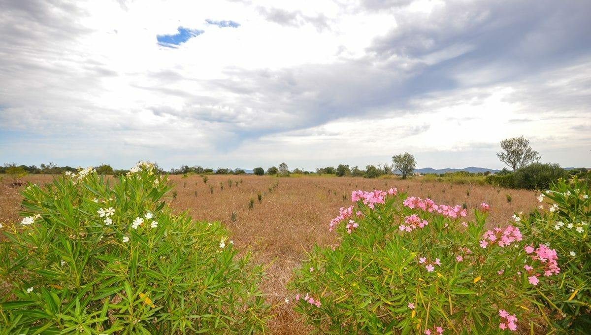 Schönes mallorquinisches Land mit Blumen Felanitx