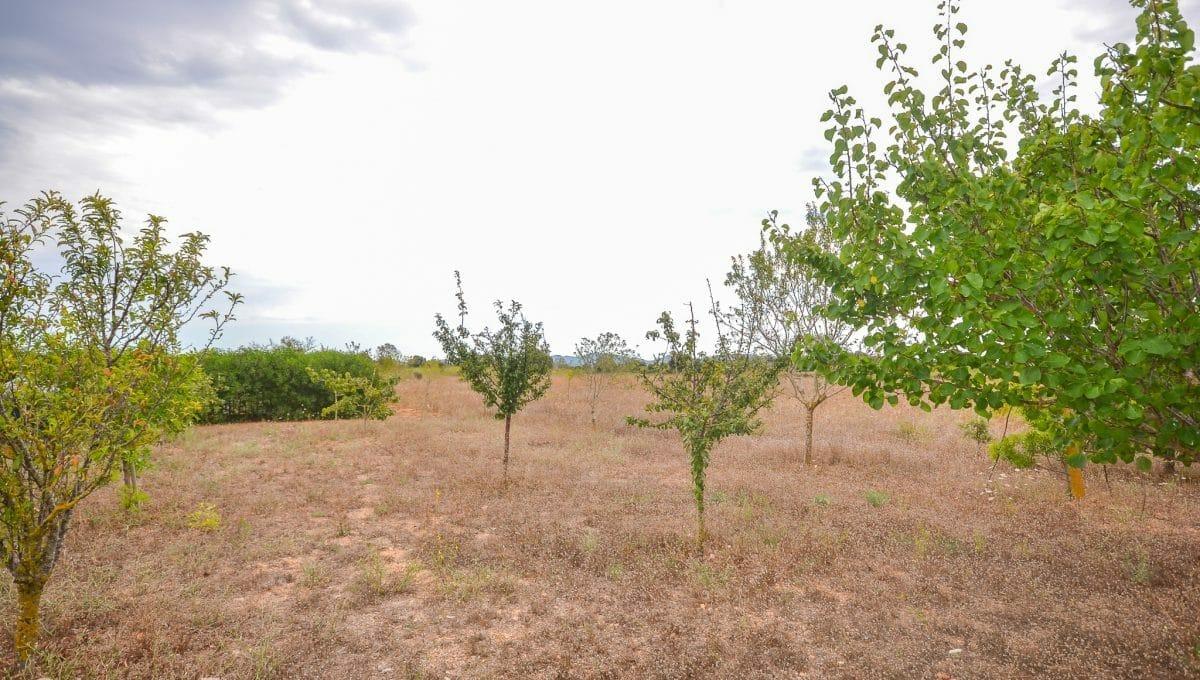 Mallorquinisches typisches Land mit Obstbaum Felanitx