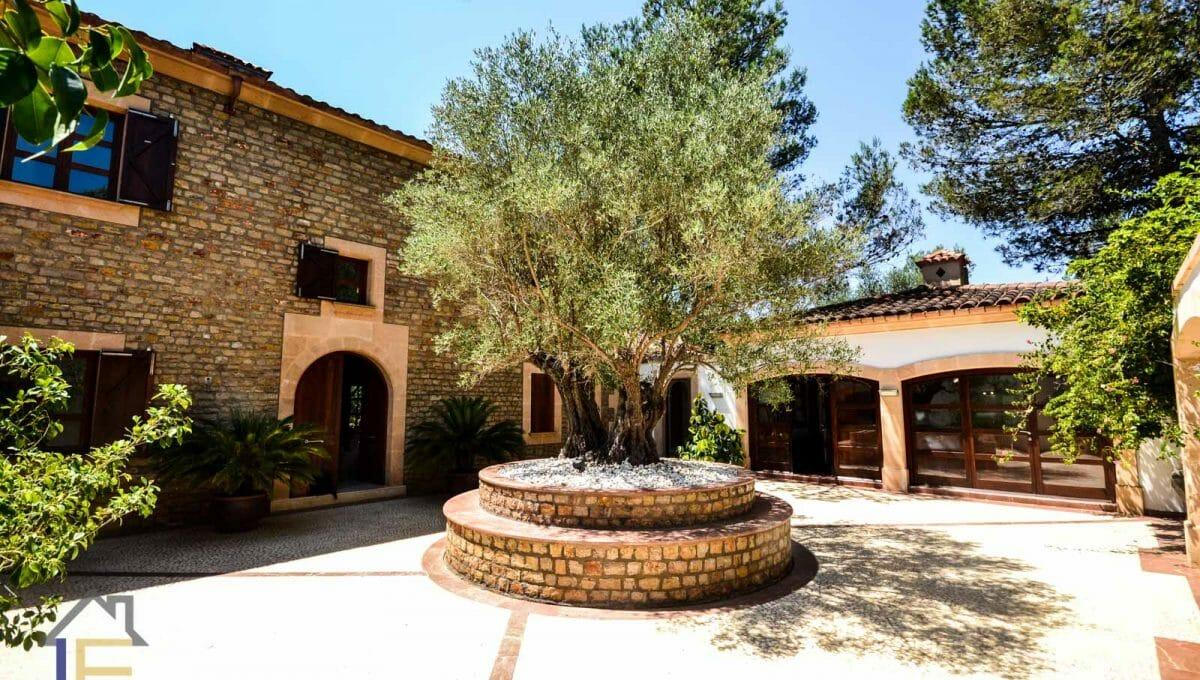 der Haupteingang mit einem Olivenbaum