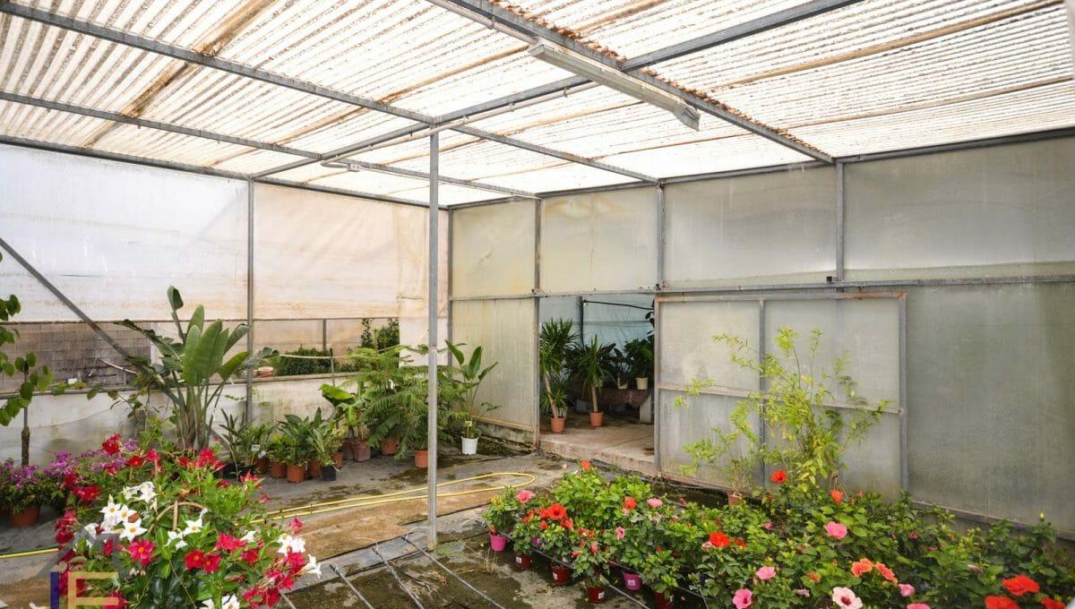 Gewächshaus mit vielen Pflanzen in Felanitx