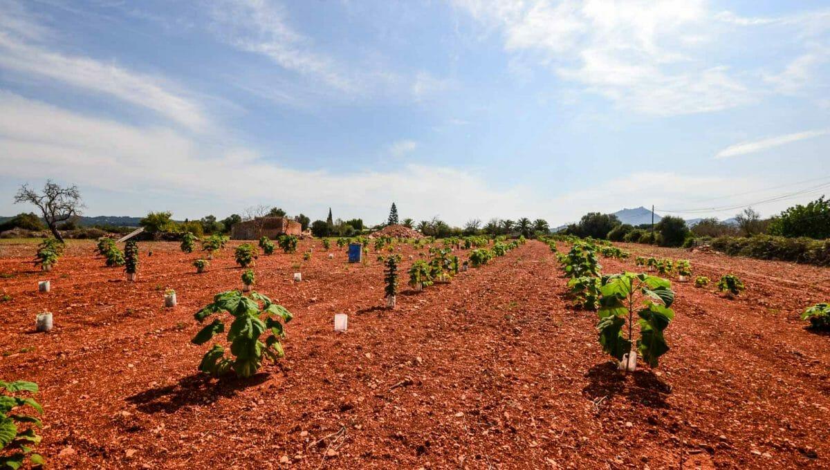 Palownia Plantage in mit viel ambizion