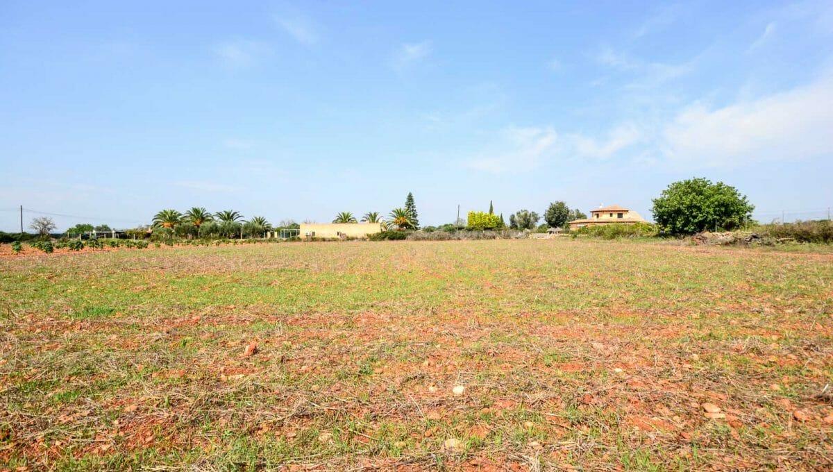 Grundstück in Son prohens mit palownia plantage