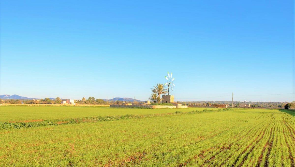 Blick auf die Windmühle
