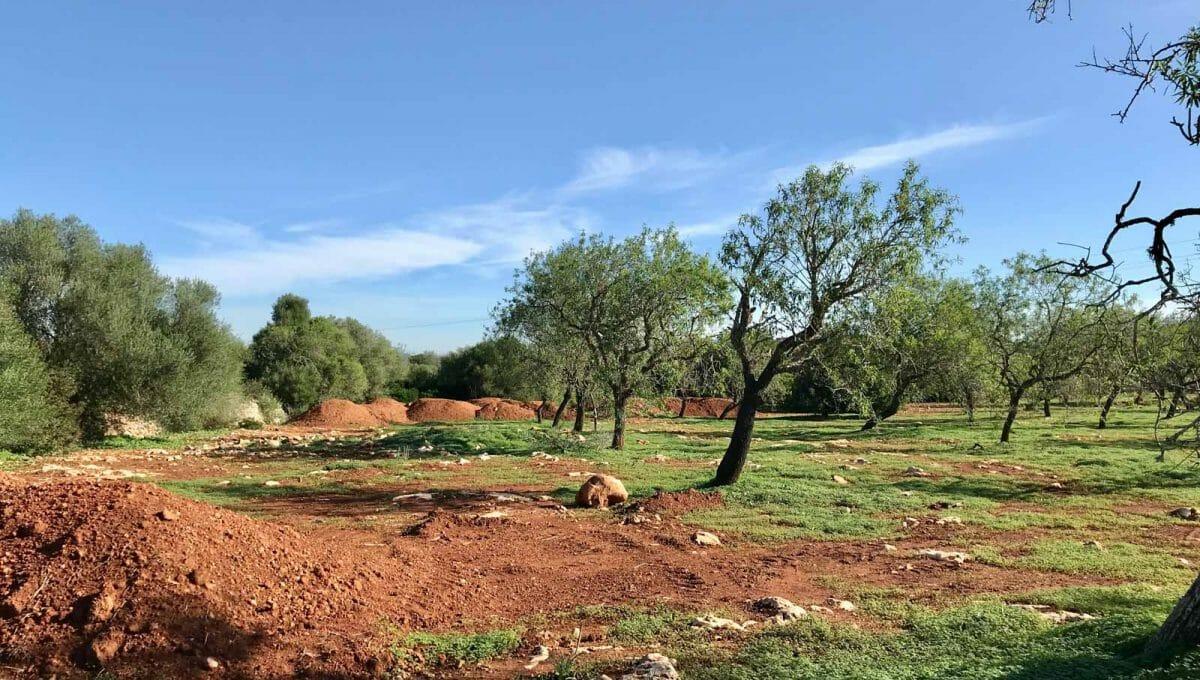 Baugrundstück mit Projekt in Campos