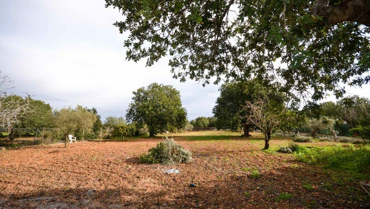 Garten mit obstbäume in Felanitx