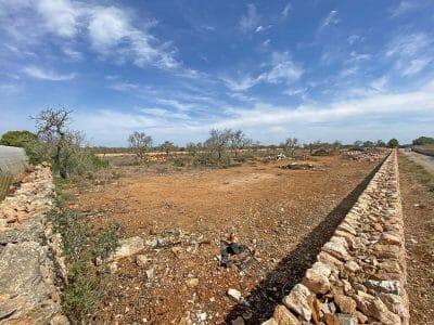 Baugrundstück in Ses Salines